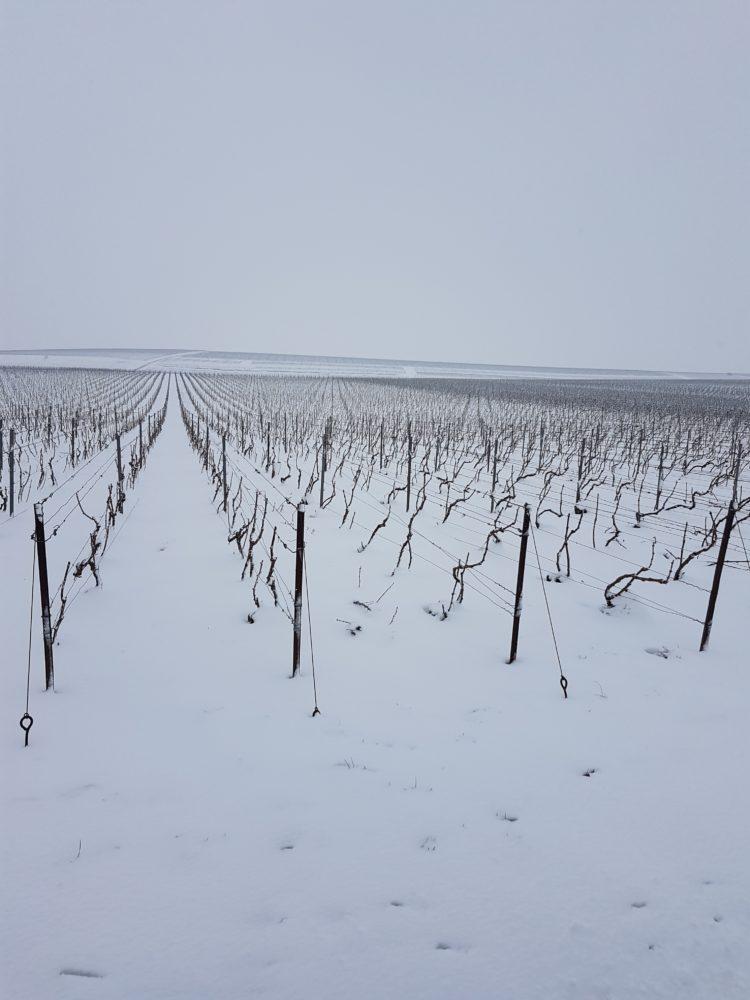 Champagne OUDEA - Les vignes enneigées